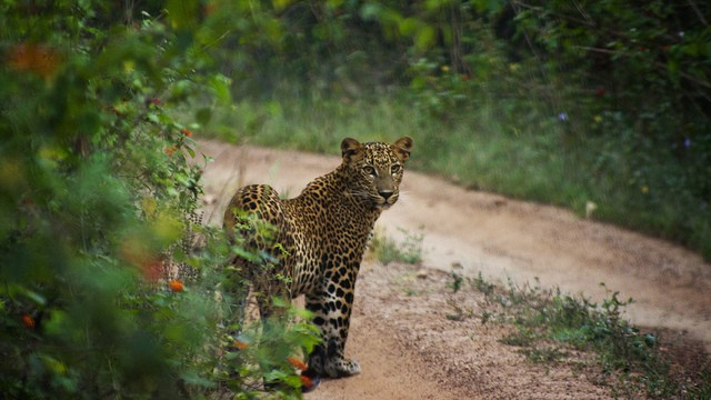 Yala National Park,Sri Lanka
