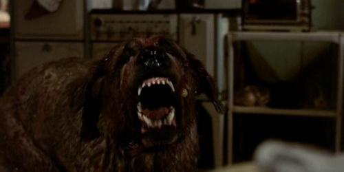 Dog Movies Like Cujo