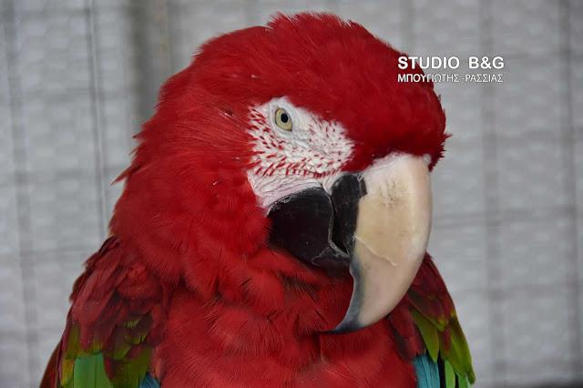 Η φωτογραφία της ημέρας: Παπαγάλος Μακάο
