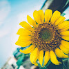 6 Tanaman Bunga Untuk Memperindah Halaman Rumah