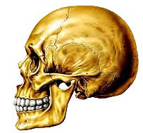 Anatomía cráneo funciones características
