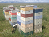 Στατική ή νομαδική μελισσοκομία; Τα υπέρ και τα κατά