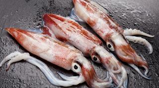 Bagi sebagian orang memancing merupakan salah satu hobby dan juga cara melepas kejenuhan s Nah ! Cara Mancing Cumi Besar Ampuh
