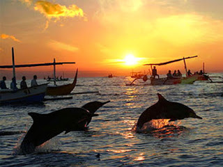 All About bali Lovina beach dolphin spotting trips