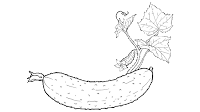 black and white cucumber clipart