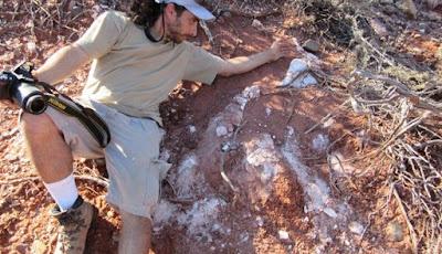 Fosil Dinosaurus Raksasa Tertua Ditemukan Di Argentina