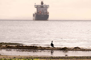 Cormorant Checking out the Tanker in his Bay