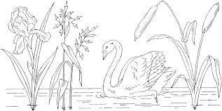 Swans Coloring Pages On River