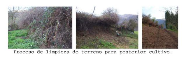 Proceso de limpieza de terreno de escayos y otras malezas para creación de huerto.