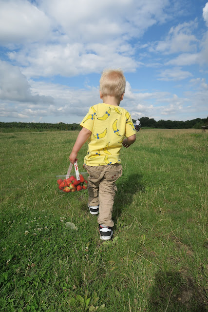 Alexander strawberry picking