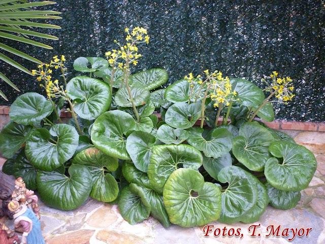 Flores y plantas silvestres