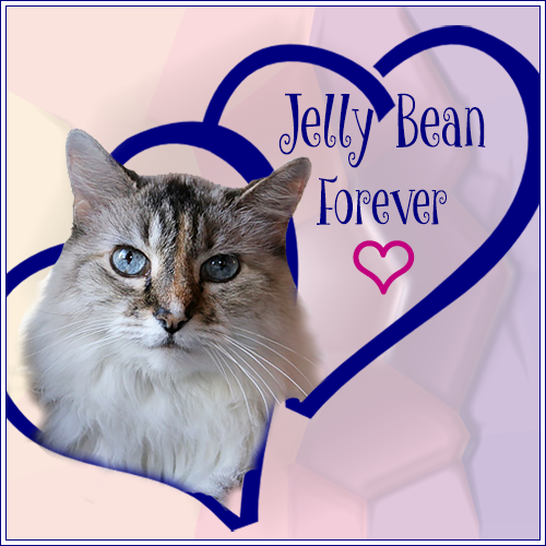 RIP JELLY BEAN