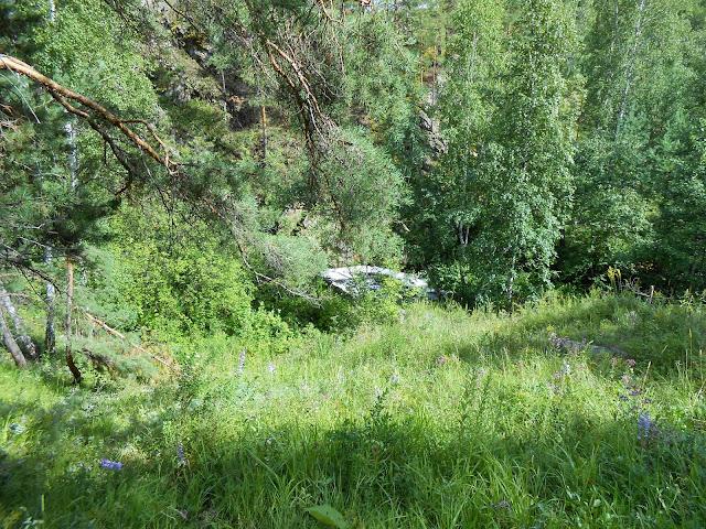 Ольгин водопад за ветками деревьев