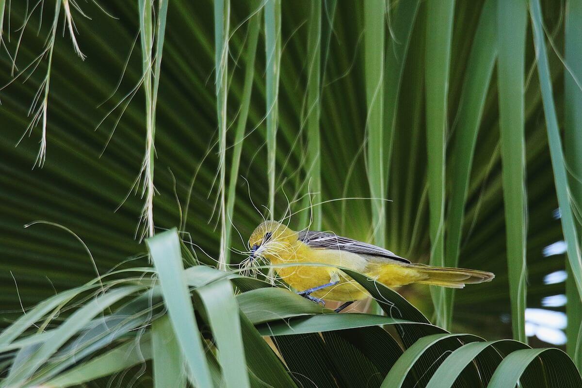 Mesmerizing Pictures That Won The 2019 Audubon Photography Awards