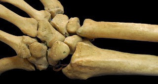 Fungsi tulang manusia