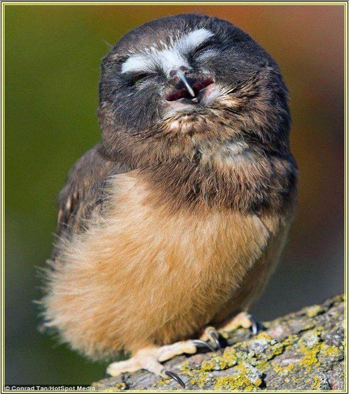 Coisas de menina: Pássaros fofos!