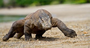 Tourism Object Komodo National Park, Beautiful Island Seven Wonders of the World