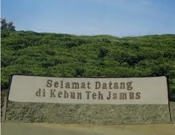 Gambar Kebun Teh Jamus Ngawi Wisata Kebun Teh Jamus Ngawi Jawa Timur Ngawi