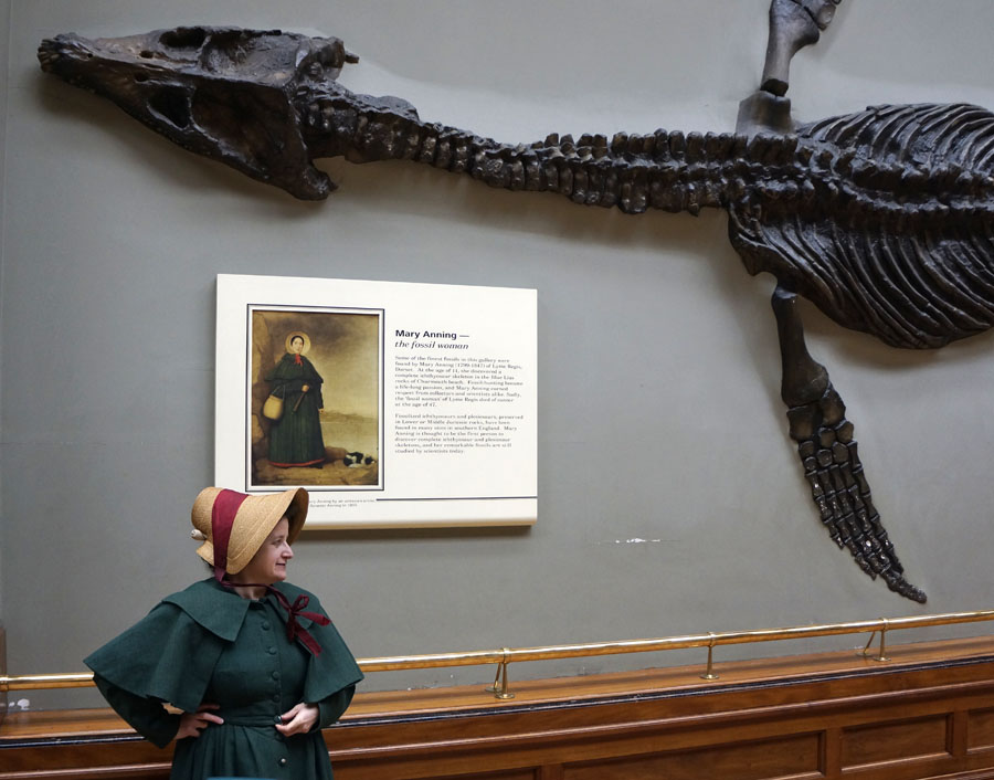 Mary Anning Plesiosaur Natural History Museum London