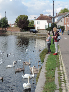 long pond emsworth swans and ducks