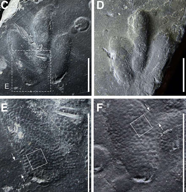 """Traços de pele de dinossauro """"preservada"""" é encontrada na Coréia (Imagem: Reprodução)"""