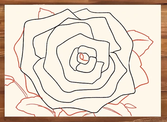 Gambar Menggambar  Bunga  Mawar  Menggunakan Pensil  Pemula