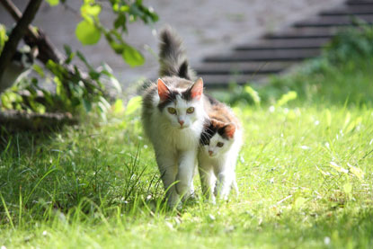 Cat and kitten walking in garden