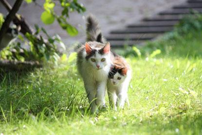 Cat and kitten walking in garden