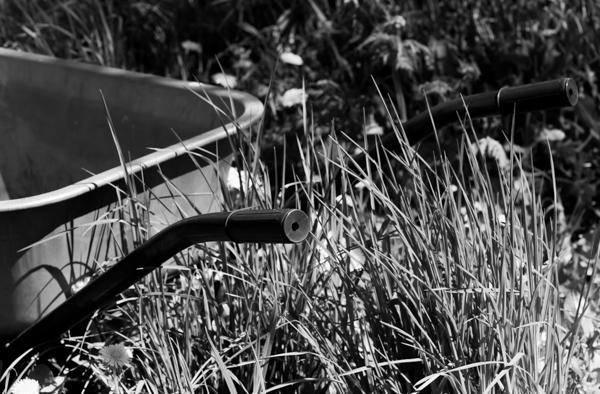 kottikärryt pitkä nurmikko puutarha puutarhanhoito voikukkapelto voikukka mustavalkoinen valokuva
