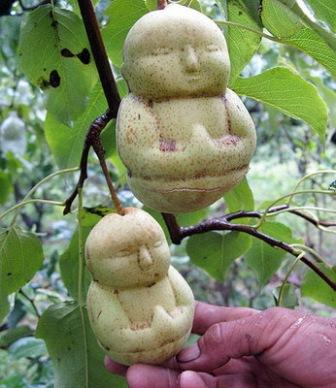 buah paling aneh dengan bentuk seperti patung budha