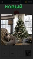 Елка около окна в новый год. В кресле сидит собака и большие окна в инее