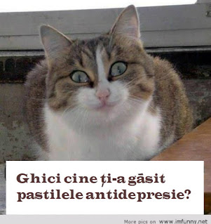 o pisica glumeata