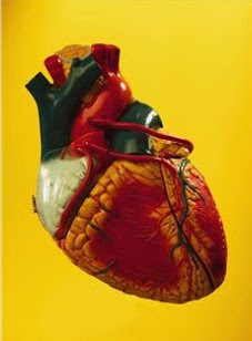 Heart Surgery for Elderly Patients