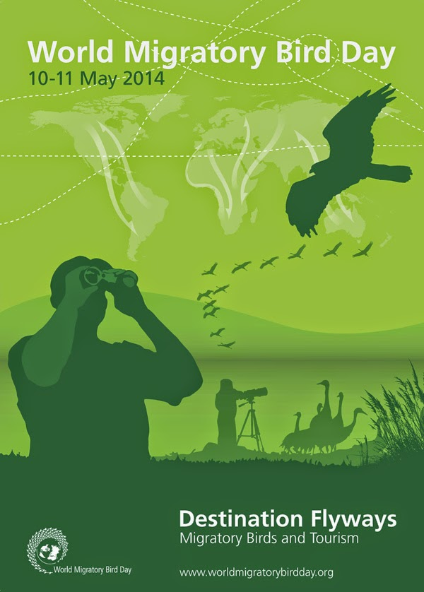 World Migratory Bird Day 2014