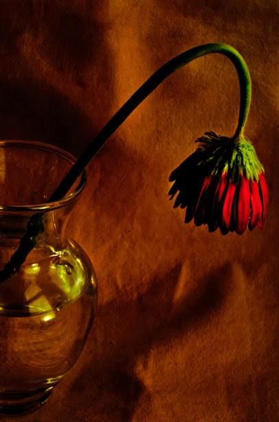 dbf1aa84e Trilhas de Luz: Das Flores Murchas