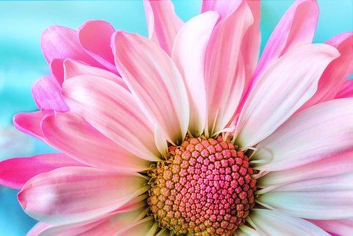 7 Ways to Grow Flowers