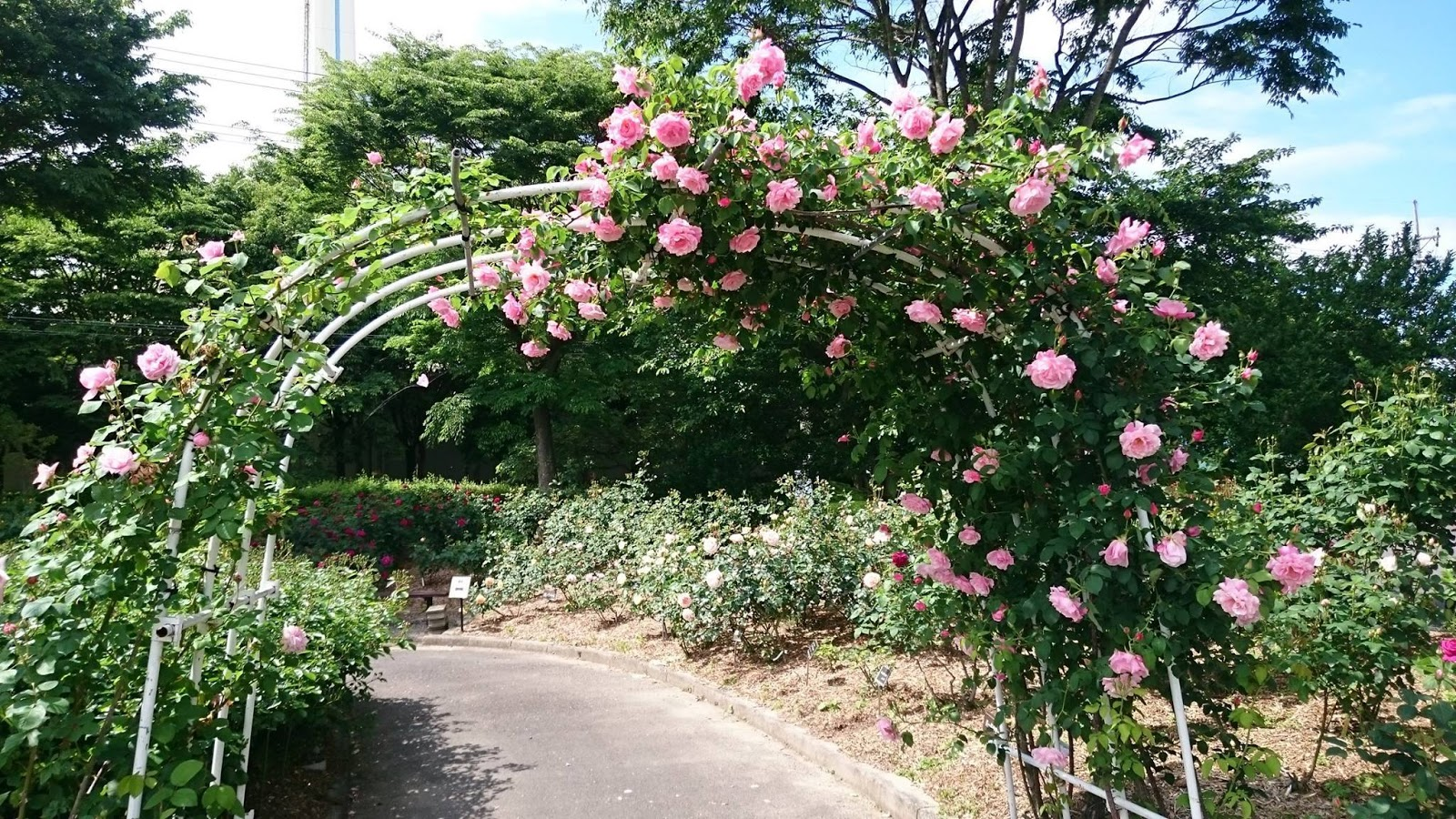 The Holiday and Travel Magazine: Rose Gardens of Shiga