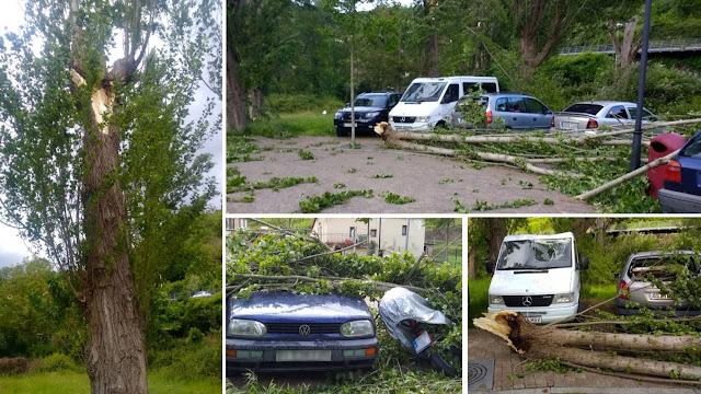 Daños por la caída de ramas en Gorostiza