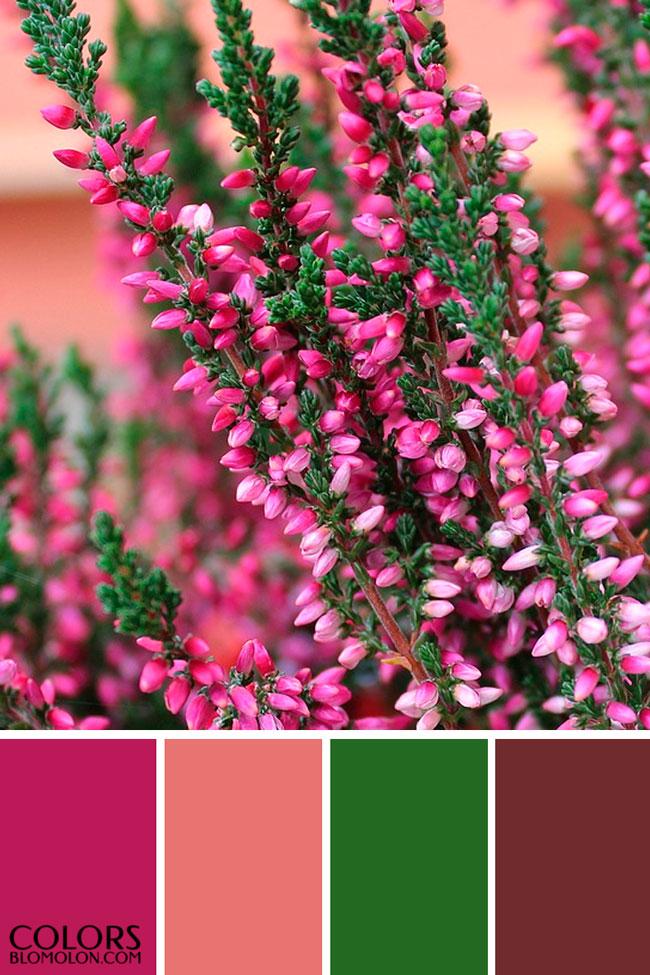 paletas_de_colores_mes_de_septiembre_3