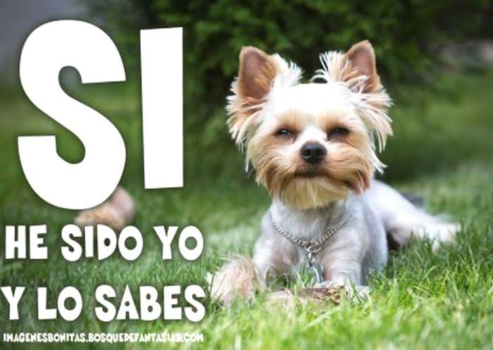 Imagenes Graciosas Chistosas Memes para reir perritos