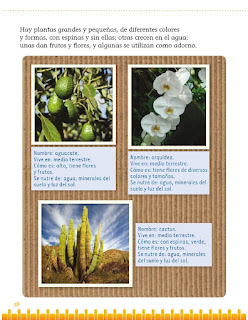 Apoyo Primaria Exploración de la Naturaleza y la Sociedad 1er grado Bloque 2 lección 3 Semejanzas y diferencias entre plantas y animales