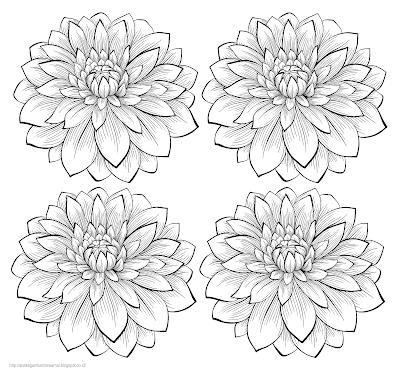 Gambar bunga dahlia 2