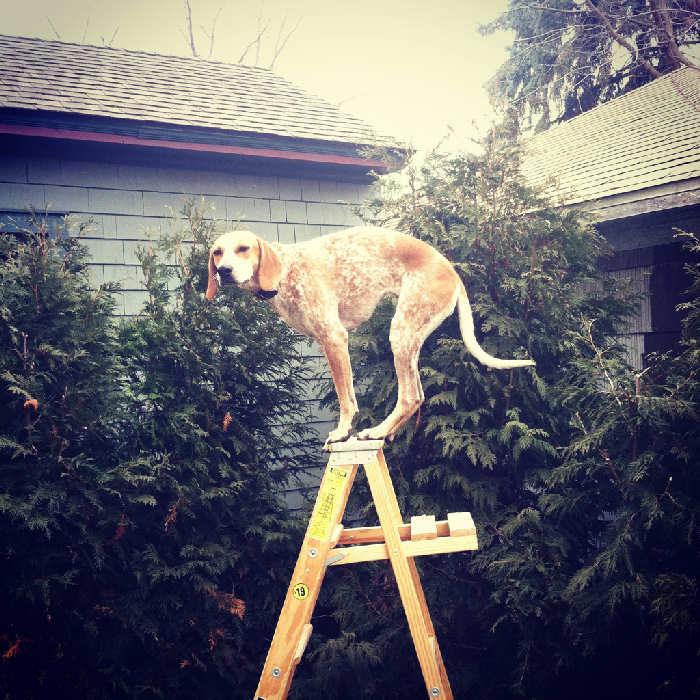 Послушная собака 8