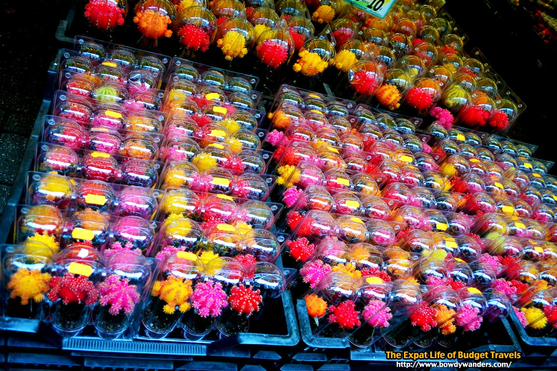 bowdywanders.com Singapore Travel Blog Philippines Photo :: Amsterdam :: The Surprisingly Smart Way to Find Holland Flowers in Amsterdam