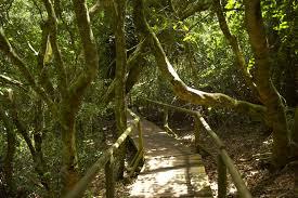 bosque valdiviano