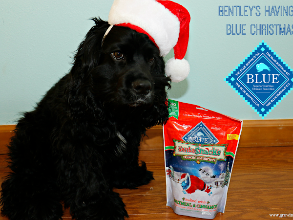 Bentley's Having a BLUE Christmas - #BLUESantaSnacks