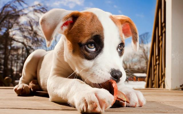 Mooie close up foto van een hond druk aan hett spelen