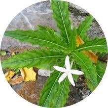 Foto Obat eksim ampuh dengan bahan alami