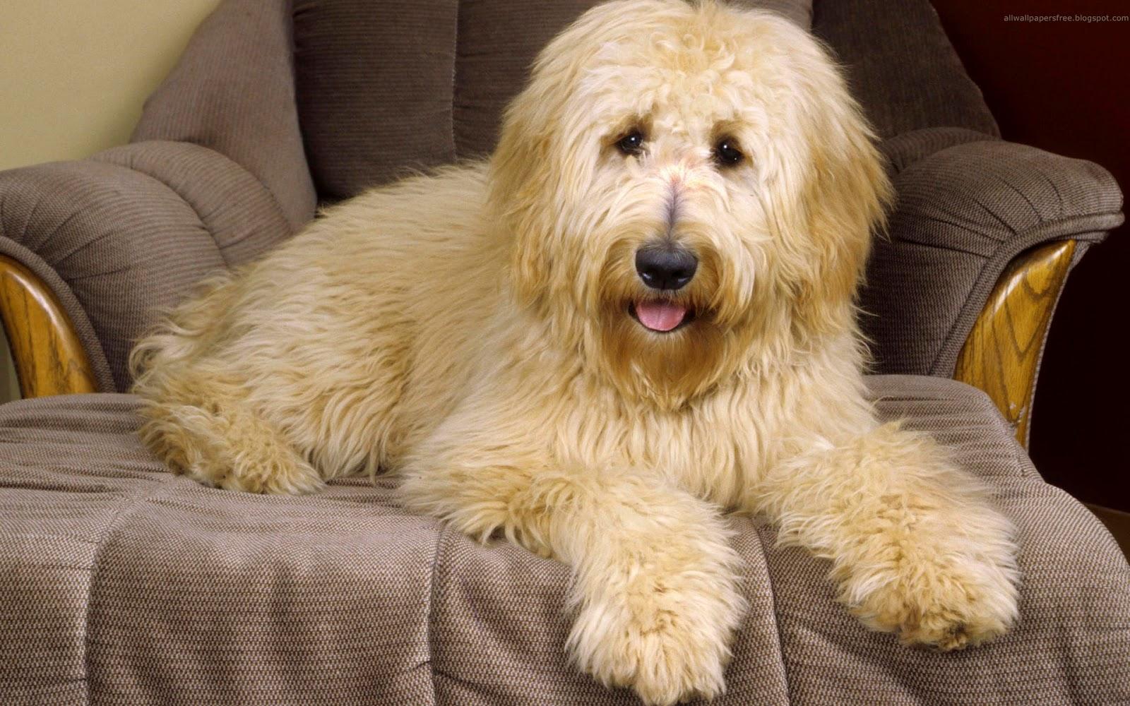 Beautiful Dogs Hd Wallpapers For Desktop - Beautiful Desi -3691
