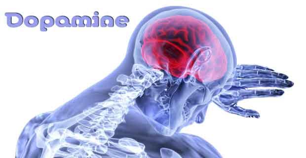 Apa itu dopamine? Fungsi, Efek Kekurangan Kelebihan Dopamin
